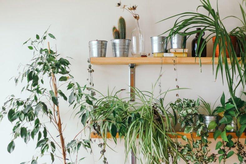 Bhoho bed room plants