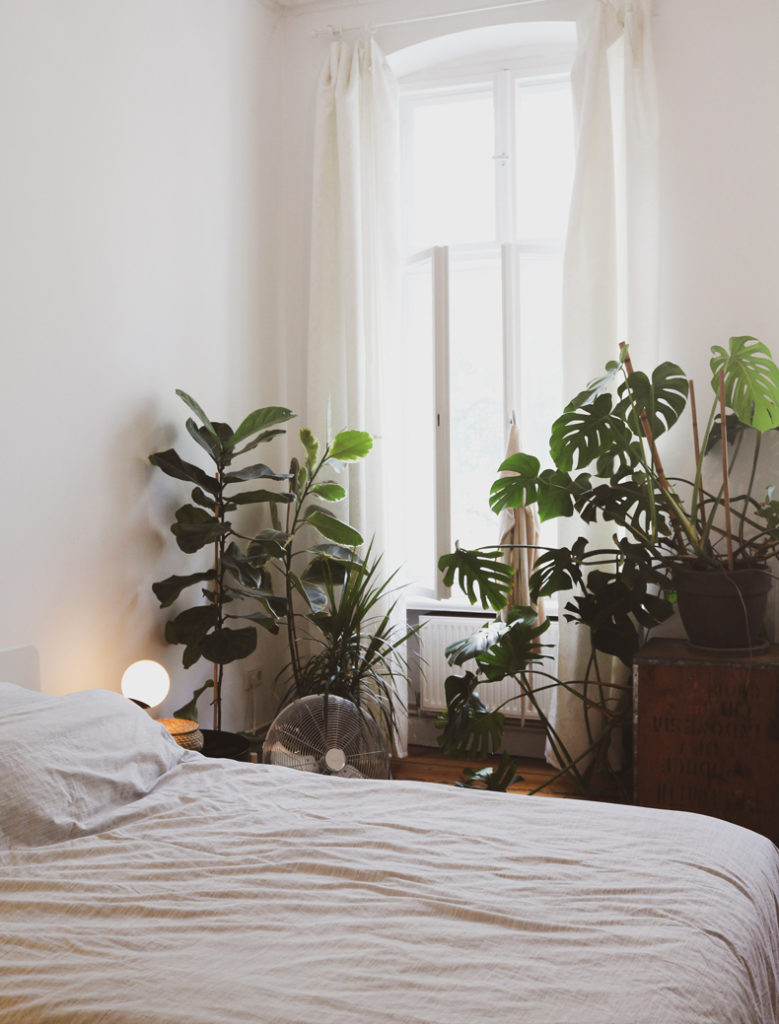 Creating a cozy minimalist home, plants are perfect for minimalist decorating